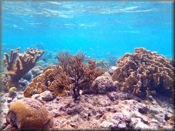 Soft corals, hard corals and feather stars