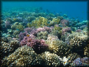 Best Snorkeling Places In The Red Sea Summary Of