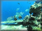 various fish over a corals outcrop