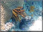 a yellow and black feather star