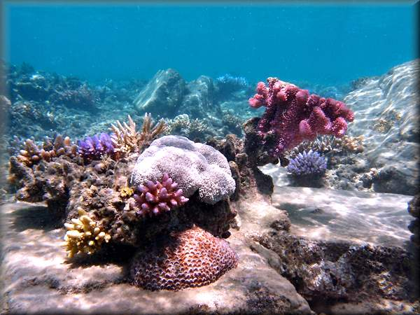 various corals forming a coral garden surrounded by boulders